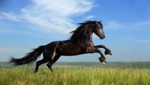 Anul Calului de Lemn: Lunile benefice in 2014 potrivit zodicului chinezesc