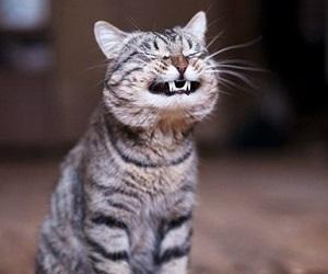 pisica-smiling-dinti650