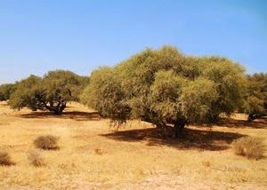 Plantation_arganier_Luc_Viatour 1