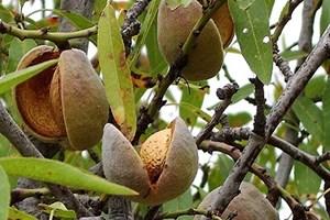 Uleiul de macadamia: noul elixir al frumusetii